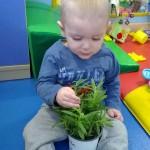 Plantas curativas en Los Nidos